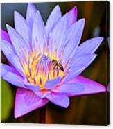 Beautiful Lily And Visiting Bee Canvas Print