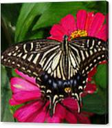 Beautiful Swallowtail Butterfly Canvas Print