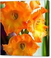 Beautiful Orange Gladiolus Canvas Print