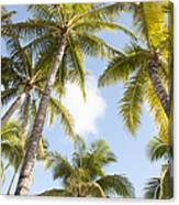Beautiful Palms Canvas Print