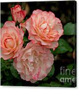 Beautiful Peach Roses Canvas Print