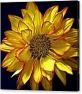 Beautiful Petals Canvas Print