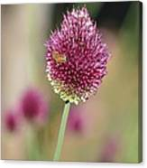 Beautiful Pink Flower With Bee Canvas Print
