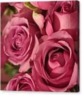 Beautiful Pink Roses 6 Canvas Print