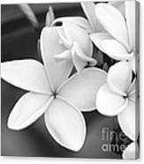 Beautiful Plumeria In Black And White Canvas Print