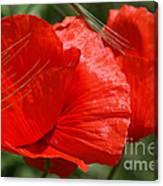 Beautiful Poppies 10 Canvas Print