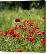 Beautiful Poppies 3 Canvas Print