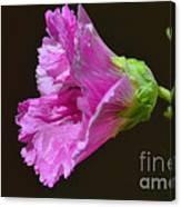 Beautiful Purple Flower Canvas Print