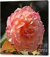 Beautiful Rose Blossom Canvas Print