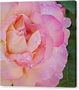 Beautiful Rose Canvas Print