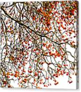Beautiful Rowan 1 Canvas Print