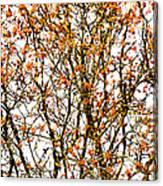 Beautiful Rowan 10 - Square Canvas Print