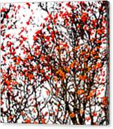 Beautiful Rowan 12 Canvas Print