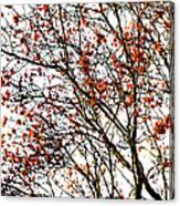 Beautiful Rowan 3 - Square Canvas Print