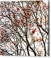 Beautiful Rowan 3 Canvas Print