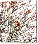 Beautiful Rowan 4 Canvas Print