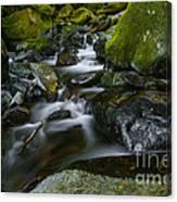 Beautiful Stream Canvas Print