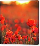 Beautiful Sunset Over Poppy Field Canvas Print