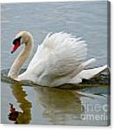 Beautiful Swan Canvas Print