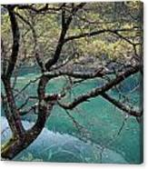 Beautiful Tree Over Blue Water Canvas Print