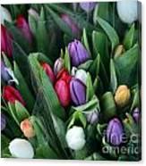 Beautiful Tulips Bouquet Canvas Print
