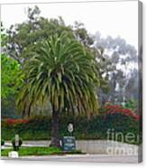 Beautiful Ventura Palm Canvas Print
