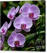 Beautiful Violet Purple Orchid Flowers Canvas Print