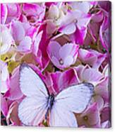 Beautiful White Butterfly Canvas Print