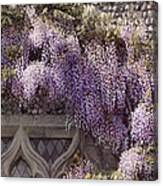 Beautiful Wisteria Canvas Print