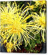 Beautiful Yellow Flower Canvas Print