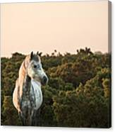 Beauttiful Close Up Of New Forest Pony Horse Bathed In Fresh Daw Canvas Print
