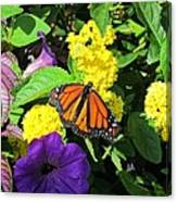 Beauty All Around Canvas Print