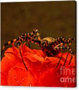 Beauty And The Bug Canvas Print