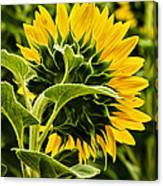 Beauty From The Back Canvas Print