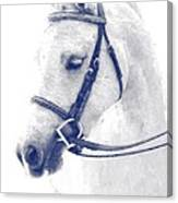 Beauty In A Bridle Canvas Print