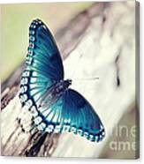 Beauty In Blue Canvas Print