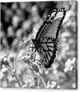 Butterfly Beauty In Nature Canvas Print