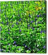 Beauty In The Meadow Canvas Print