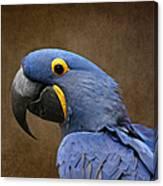 Beauty Is An Enchanted Soul - Hyacinth Macaw - Anodorhynchus Hyacinthinus Canvas Print