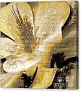 Beauty Iv Canvas Print