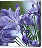 Beauty Lilies Canvas Print