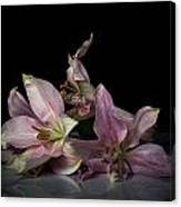 Beauty Of Decaying Lilies Canvas Print