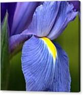 Beauty Of Iris Canvas Print