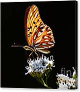 Beauty Of Nature Butterfly Brazil 2 Canvas Print