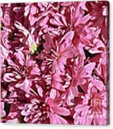 Beauty Of Pink Canvas Print