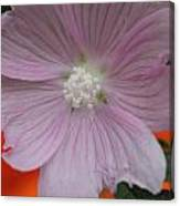 Beauty Of The Hollyhock  Canvas Print