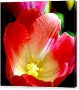 Beauty Of Tulips Canvas Print