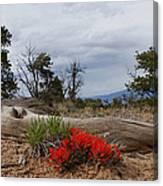 Beauty On 25 Mesa Panoramic Canvas Print