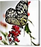 Beauty Wing Canvas Print