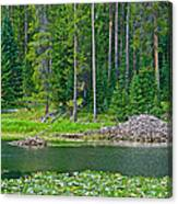 Beaver Dam In Heron Pond In Grand Teton National Park-wyoming Canvas Print